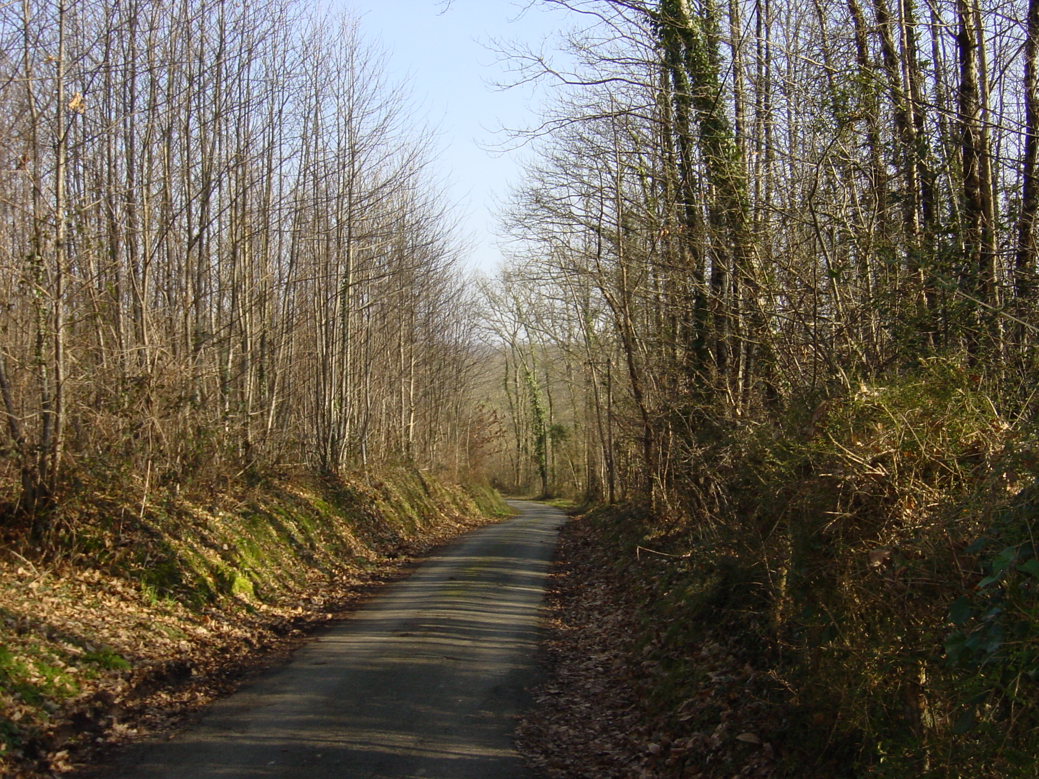 route-dans-foret-vers-fontaines-braud
